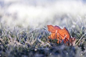 fallenleafinfrost.jpg